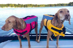 flotadores perros